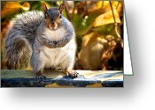 Fun Greeting Cards - One Gray Squirrel Greeting Card by Bob Orsillo