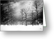 Winter Trees Photo Greeting Cards - One Night In November Greeting Card by Bob Orsillo