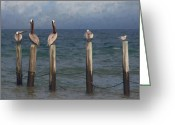 Seabirds Digital Art Greeting Cards - One Of These Is Not Like The Others Greeting Card by Forest Stiltner