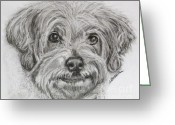 Bichon Greeting Cards - Only You Greeting Card by Susan A Becker