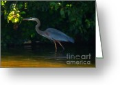 Great Blue Heron Digital Art Greeting Cards - Oooh Shiny faux oil Greeting Card by Rrrose Pix