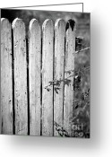 Fence Gate Greeting Cards - Open gate Greeting Card by Gaspar Avila