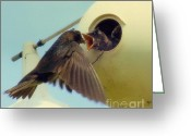 Baby Birds Greeting Cards - Open Wide Greeting Card by Karen Wiles