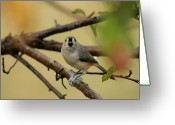 Talking Birds Greeting Cards - Open Wide Greeting Card by Karol  Livote