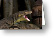 Lizard Greeting Cards - Open Wide Greeting Card by Mike  Dawson