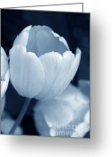 Blue Florals Greeting Cards - Opening Tulip Flower Blue Monochrome Greeting Card by Jennie Marie Schell