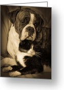 Buddies Greeting Cards - Opposites Attract Greeting Card by DigiArt Diaries by Vicky Browning