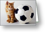 Cuddly Greeting Cards - Orange and white kitten with soccor ball Greeting Card by Garry Gay