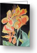Canna Greeting Cards - Orange And Yellow Canna Lily on Black Greeting Card by Warren Thompson