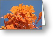 Red Autumn Trees Greeting Cards - Orange Autumn Leaves art prints Blue Sky Greeting Card by Baslee Troutman Fine Art Photography