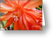Flower Stamen Greeting Cards - Orange Cactus Greeting Card by Kaye Menner