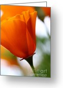 Orange Flower Photo Greeting Cards - Orange California Poppy . 7D14789 Greeting Card by Wingsdomain Art and Photography