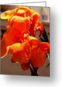 Canna Greeting Cards - Orange Canna Portrait Greeting Card by M Diane Bonaparte