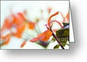 David Lade Greeting Cards - Orange cranesbill Greeting Card by David Lade