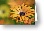 Stamen Greeting Cards - Orange Crush Greeting Card by Charles Dobbs