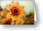 Natur Greeting Cards - Orange Dahlia  Greeting Card by Angela Doelling AD DESIGN Photo and PhotoArt
