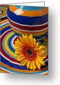 Plates Greeting Cards - Orange daisy with plate and vase Greeting Card by Garry Gay