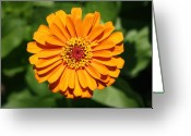 Dana Oliver Greeting Cards - Orange Greeting Card by Dana  Oliver