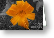 Barks Greeting Cards - Orange Daylily After Rains Greeting Card by Deborah Smolinske