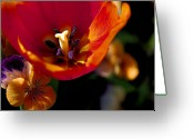 Loose Panicles Greeting Cards - Orange Delight Greeting Card by Don  Wright