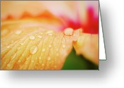 Orange Flower Photo Greeting Cards - Orange Drops Greeting Card by Andre Bernardo
