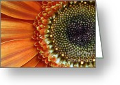 Flower Greeting Card Greeting Cards - Orange Energy Greeting Card by Dan Holm