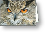 Owl Drawings Greeting Cards - Orange-Eyed Owl Greeting Card by Carla Kurt