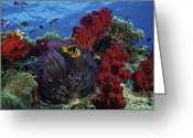 Tropical Climate Greeting Cards - Orange-finned Clownfish And Soft Corals Greeting Card by Terry Moore