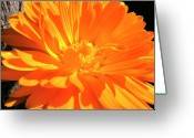 Orange Daisy Photo Greeting Cards - Orange Flower and Fence Post Greeting Card by Thomas R Fletcher
