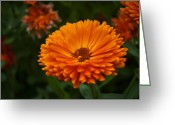 Noah Greeting Cards - Orange Flower at the Manor Greeting Card by Noah Katz