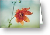 Denmark Greeting Cards - Orange Flower Greeting Card by Julia Davila-Lampe