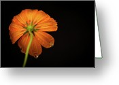 Orange Flower Photo Greeting Cards - Orange Flower On Black Background Greeting Card by photo by Jason Weddington