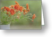 Orange Flower Photo Greeting Cards - Orange Flower Greeting Card by Pamela N. Martin