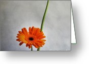 Oldfashioned Greeting Cards - Orange gernera Greeting Card by Bernard Jaubert