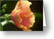 Flower Photograph Greeting Cards - Orange Hibiscus Greeting Card by Beth Akerman