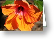 Sub Greeting Cards - Orange Hibiscus Greeting Card by Suzanne Gaff
