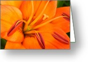 Flower Gardens Greeting Cards - Orange II Greeting Card by Amanda Kiplinger