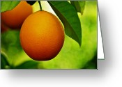 Lyle  Huisken Greeting Cards - Orange Greeting Card by Lyle  Huisken