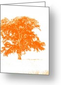 Hdr Look Photo Greeting Cards - Orange Oak Greeting Card by Alan Look