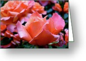Rosaceae Greeting Cards - Orange-Pink Roses  Greeting Card by Rona Black