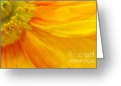 Flower Picture Greeting Cards - Orange Poppy II Greeting Card by Angela Doelling AD DESIGN Photo and PhotoArt