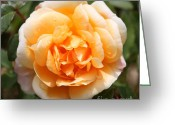 Orange And Green Greeting Cards - Orange Rose Square Greeting Card by Carol Groenen