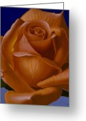 Hyper-realism Painting Greeting Cards - Orange Rose with Blue Background Greeting Card by Tony Chimento