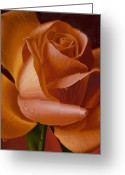 Hyper-realism Greeting Cards - Orange Rose with Red Background Greeting Card by Tony Chimento