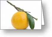 Healthy Eating Greeting Cards - Orange Satsuma Greeting Card by Bernard Jaubert