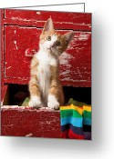 Looking Greeting Cards - Orange tabby kitten in red drawer  Greeting Card by Garry Gay