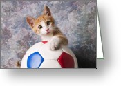 Whiskers Photo Greeting Cards - Orange tabby kitten with soccer ball Greeting Card by Garry Gay