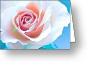 Rose Photos Greeting Cards - Orange White Blue Abstract Rose Greeting Card by Artecco Fine Art Photography - Photograph by Nadja Drieling