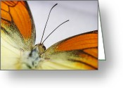 Black Wings Greeting Cards - Orange Yellow Butterfly 1 Greeting Card by Jessica Velasco