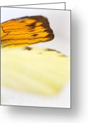 Black Wings Greeting Cards - Orange Yellow Butterfly 2 Greeting Card by Jessica Velasco